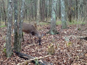 fb-deer